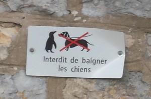 Affichage au dessus d'un bassin de fontaine. Il est interdit de baigner des chiens , mais permis de baigner des pinguins.